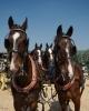 HvB-Paarden