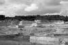Gerard -landschap-4zw